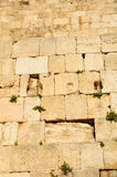 Kotel. Jerusalem. Royalty Free Stock Photography