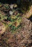 Kotelni ścig insekt na lato zieleni kwiatach obrazy stock
