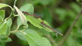 Kotelni gry dragonflies obraz stock