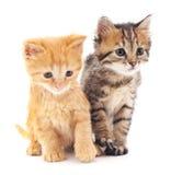 kotki dwa Obrazy Stock