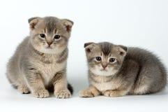 kotki dwa Obrazy Royalty Free
