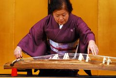 Koto zither player. Elderly Japanese lady playing the koto a traditional zither with 13 strings and the national instrument of Japan Royalty Free Stock Photo