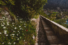 Kotor Bay and Old Town Landscape Stock Image