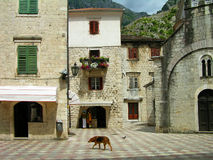 Kotor old town, Montenegro Royalty Free Stock Images