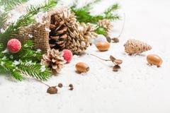 Kottar i en påse Plundra och snö på en vit bakgrund nytt år för bakgrundsjul Arkivfoton
