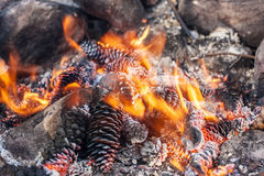 Kottar i ett brandslut upp arkivbilder