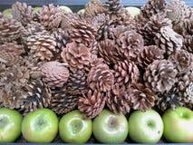Kottar och gräsplanäpplen. Fotografering för Bildbyråer