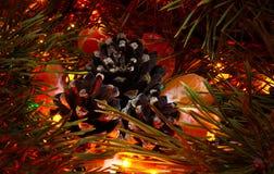 Kottar och tangerin Royaltyfria Bilder