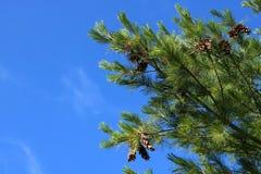 kottar sörjer treen royaltyfri fotografi