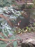 Kottar som dumpas i floden Royaltyfri Fotografi