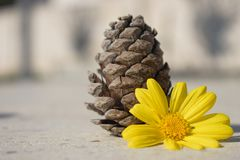 Kotte av den granträdet och blomman Arkivbild