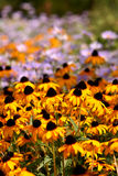 kottefältet blommar yellow royaltyfri fotografi