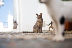 kotów bawić się Zdjęcie Stock