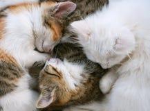 koty śpiący fotografia stock