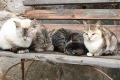 koty Zdjęcia Stock