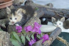Koty Obrazy Royalty Free