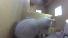 Koty bawić się w kartonu domu, gopro salowy widok zdjęcie wideo