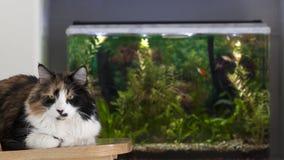 Koty dobrze umieszczają w domu Fotografia Royalty Free