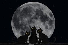 koty Halloween ilustracji