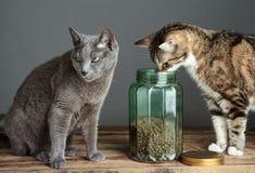 Koty i kota jedzenie w szkle Zdjęcia Stock