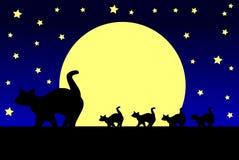 Koty i księżyc Zdjęcia Stock