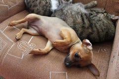 Koty i szczeniak bawić się na krześle 30680 Zdjęcie Stock