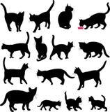 koty inkasowi Zdjęcie Royalty Free