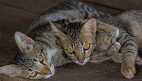 Koty karmiący Obraz Stock