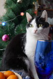 Koty kiedy było tła może święta temat ilustracyjny użyć Zdjęcie Stock