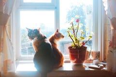 Koty na nadokiennym parapecie Zdjęcia Stock