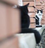 Koty na ogrodzeniu Fotografia Royalty Free