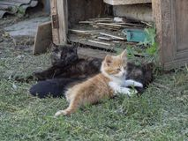 Koty odpoczywa na słomie w cieniu obrazy royalty free