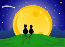 Koty patrzeje księżyc Zdjęcia Royalty Free