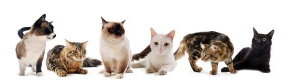 koty pracowniani Zdjęcia Royalty Free