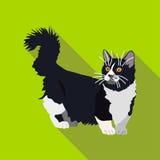 Koty różni trakeny z długim cieniem Obrazy Royalty Free