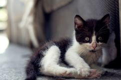 koty salowi Zdjęcie Royalty Free