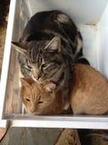 koty szczęśliwi Obrazy Royalty Free