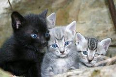 koty trochę obraz stock