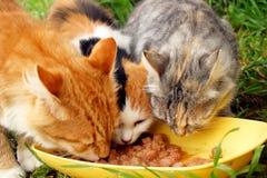 koty trzy Zdjęcie Royalty Free