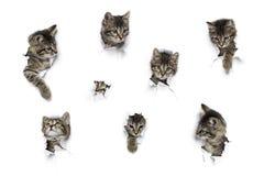 Koty w dziurach papier Obrazy Royalty Free