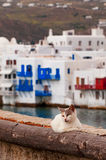 Koty w Grecja Zdjęcia Royalty Free