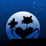 Koty w miłości Obraz Stock