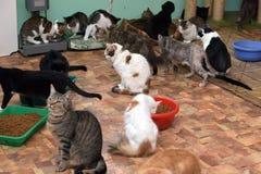Koty wpólnie na macie przy zwierzęcym schronieniem Fotografia Stock