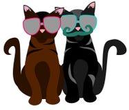 Koty z okularami przeciwsłonecznymi ilustracji