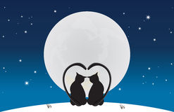 koty zestrzelają blask księżyca siedzą Zdjęcia Stock