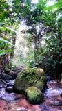 Kou: rots in de rivier stock afbeelding