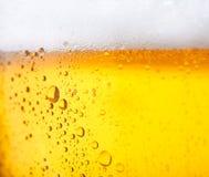 Koud bier Royalty-vrije Stock Foto's
