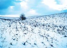 Koud blauw de winterlandschap Stock Afbeelding