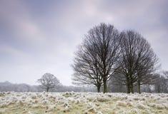 Koud ijzig daglandschap Royalty-vrije Stock Foto