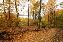 Koud Park van de Staat van de de Lentehaven 10 Stock Foto's